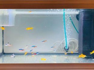 Vand acvariu aproape nou cu 25 de pesti