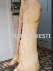 Carcasa proaspătă cu șorici pârlit animale rase carne abator autorizat