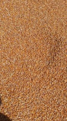 Porumb, grâu, orz, mazăre, orez, Șroturi, furaje, TRANSPORT gratuit