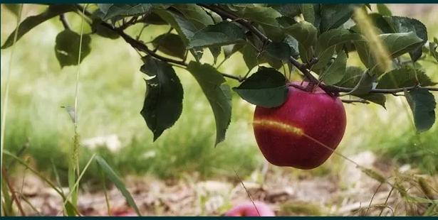 Fructe uscate cu si fara miere de albine