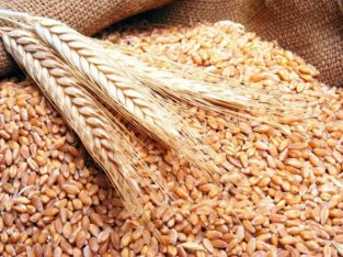 Soft produse agricole cereale.ingrasaminte