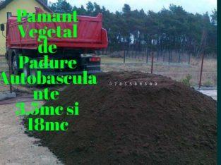 Transport pamant vegetal Negru Pamant pentru Gazon Pamant de flori