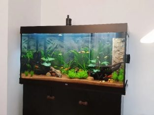 Kit complet acvariu JUWEL + accesorii (si pesti/plante/substrat)