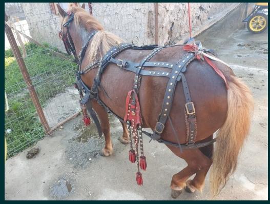 Vând ponei