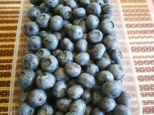 Afine de cultura cu fruct mare – 6 Hectare
