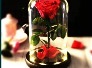Trandafir criogenat XL rosu in cupola