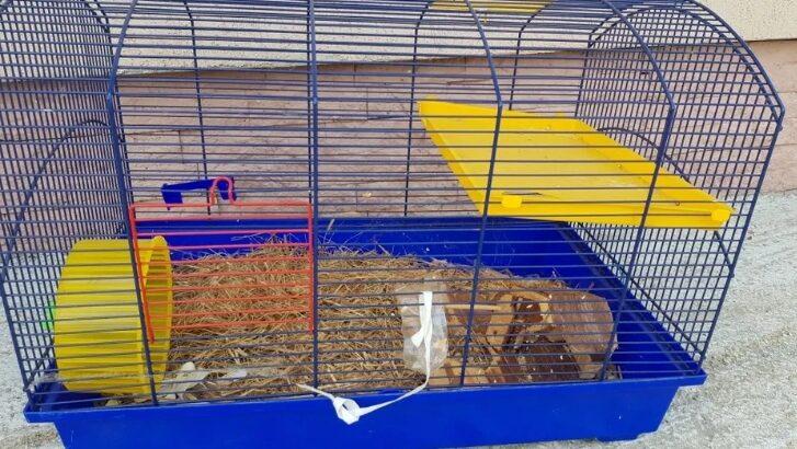 Cușca hamsteri