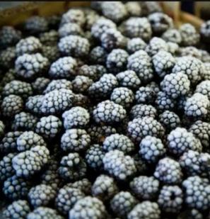Fructe de Padure Congelate