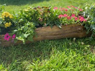Decorațiuni cu flori tăiate și plante în ghiveci