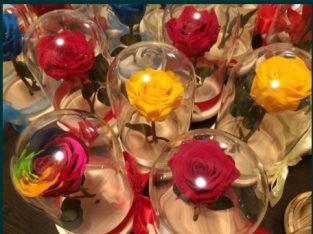 Trandafir criogenat conservat ideal cadou zile aniversare de nastere