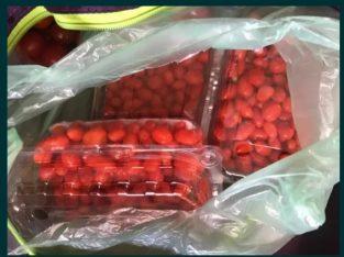 Producator Fructe Goji Proaspete Bio din Plantatie
