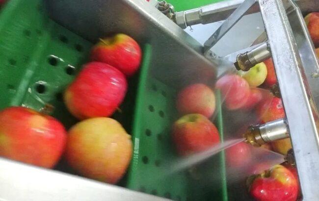 Start sezon prelucrare suc natural din fructe/legume. Suc de mere!