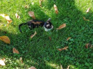 Donez 2 puisori pisică talie mică – Pisici / Pisică