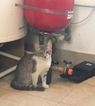 Pui pisic caut stapan