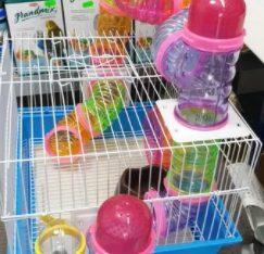 Cusca hamster cu labirint