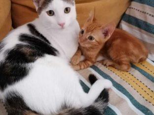 Ofer spre adopție doi pisoi, prieteni la catarama!