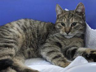 Pisicuța Luna – pt adopție
