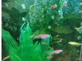 Pești exotici și accesorii.. Hrană pesti…