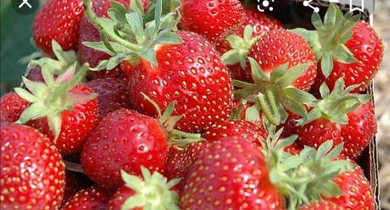 Producem și vindem diferite soiuri de pomi fructiferi . Avem căpșuni, zmeură, coacăză, viță de vie, mure,flori decorative și trandafiri la ghiveci.
