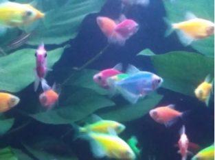 Pești acvariu de vânzare